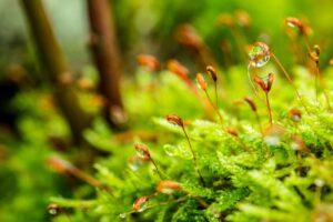 origen de las plantas