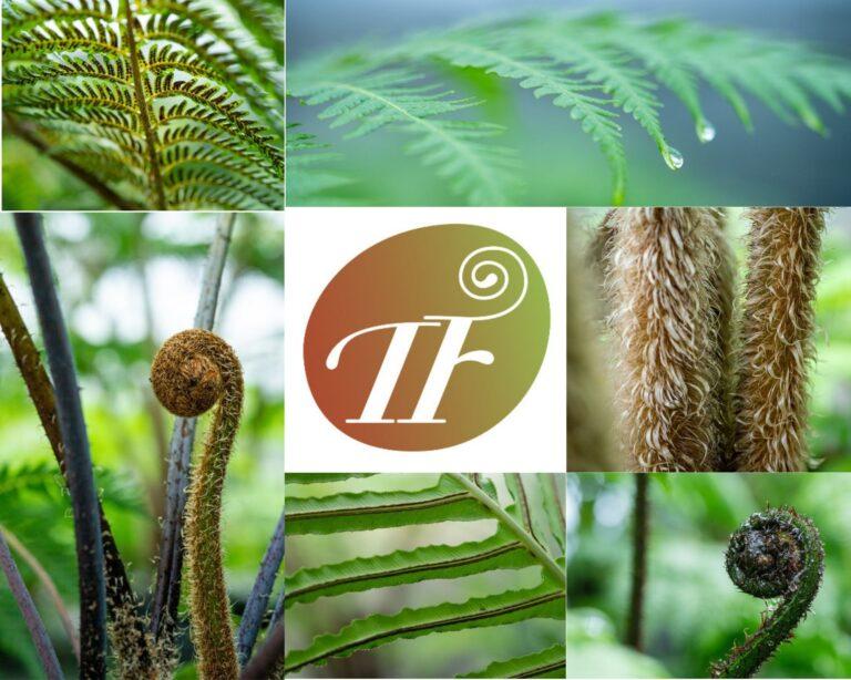 tree fern nursery